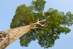 Huge tree and blue sky Stock Images