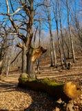 Huge tree cut down Stock Photo