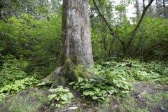 Huge tree Stock Photos