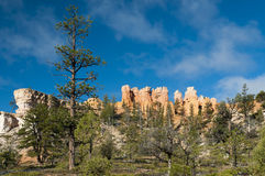 Huge tree in front of bryce canyon rocks. Trees and bushes on front of the red sandstone at bryce canyon national reserve Stock Photo