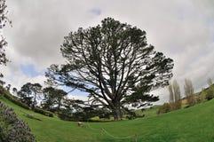 Huge tree Royalty Free Stock Photo