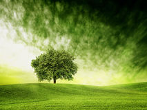 Find time for green time Royalty Free Stock Image