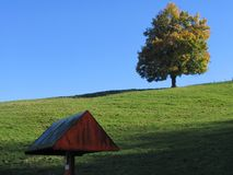 Huge tree in the meadow. Against blue sky with triangle form on the foreground Royalty Free Stock Photo
