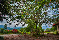 Huge tree and mountains in the distance. The landscape on the island of Borneo. Sabah, Malaysia. Stock Photo