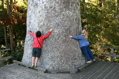 Huge tree,New zealand Stock Photo