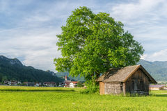 Huge tree next to old wooden house Stock Images