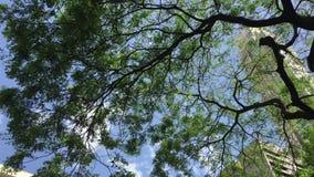 Huge tree stock video