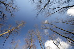Huge trees Stock Image
