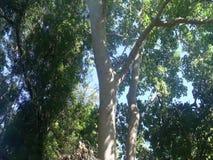 A huge tropical tree. Farm.  Palawan Island. A huge tropical tree. Farm. Philippines. Palawan Island stock footage