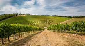 Huge vineyard fields in Tuscany, Italy. Huge grape vineyard fields in Tuscany, Italy royalty free stock images