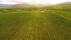 Huge vineyard and Georgian mountains, vine culture and farming, landscape nature. Stock photo royalty free stock photography