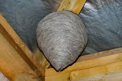 Huge wasp nest Stock Images