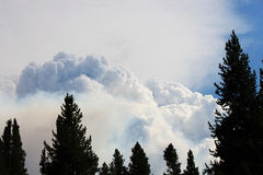 Huge wildfire in dry forest landscape Royalty Free Stock Photo
