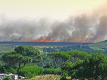 A huge wildfire - South AFrica Royalty Free Stock Images