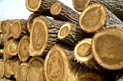 Huge wood logs in a stack Royalty Free Stock Images