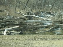 Huge Wooden Dam Clogging A River. Huge wooden damn of large tree logs clogging up a river during the springtime in rural America Royalty Free Stock Photos