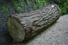 Huge Wooden Log Royalty Free Stock Photo