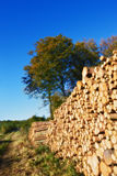 Huge woodpile Stock Photo