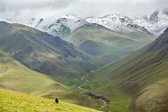 Huge yak running down the hill, Tien Shan Stock Photos