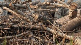 Hugga av trä arkivfilmer