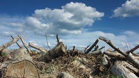 Hugga av trä lager videofilmer
