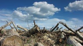 Hugga av trä stock video