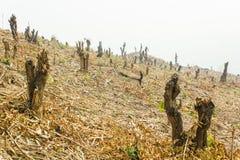 Hugga och bränn odling, rainforestsnitt och bränt för att plantera royaltyfri foto