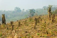 Hugga och bränn odling, rainforestsnitt och bränt för att plantera arkivbilder