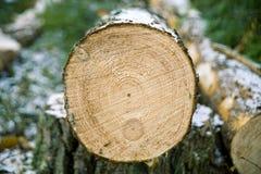 huggen av tree Arkivbilder