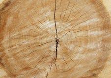 huggen av tree Arkivfoton