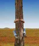 hugger结构树 免版税图库摄影