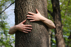 Hugger d'arbre Photo stock