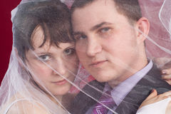 Hugging Couple newlyweds behind wedding veil Royalty Free Stock Photos