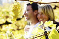 Hugging couple in vineyard. Stock Photography