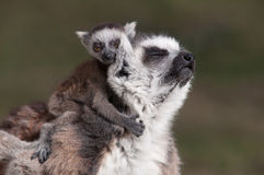 Hugging the mother Stock Photography