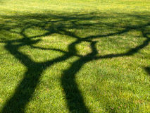 Hugging shadow Stock Photography