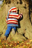 Hugging a tree. Young toddler climbing and hugging a tree Royalty Free Stock Photography