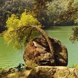 Hugging Tree Royalty Free Stock Photo