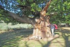 Hugging a tree Stock Photos