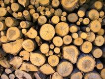 huggit av trä royaltyfri bild