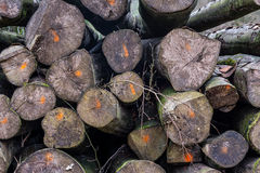 Huggit av tydligt branschtrans. Forest Deforestation för journaler royaltyfri foto