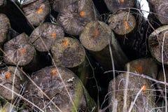 Huggit av tydligt branschtrans. Forest Deforestation för journaler arkivfoto