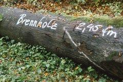 Huggit ut träd i skogen som är klar att säljas som vedträ Arkivfoton