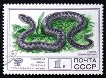 Huggorm en serie av giftiga ormar för bilder, circa 1977 Royaltyfria Bilder