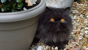 Hugo the cat stock image