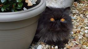 Hugo die Katze Stockbild