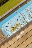 Hugo prosecco elderflower soda ice summer drink Stock Images