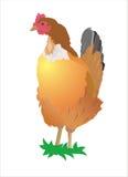 Huhn auf einem weißen Hintergrund Lizenzfreie Stockbilder
