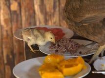 Huhn, das Reis isst stockfoto