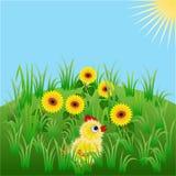 Huhn in den Sonnenblumen Lizenzfreies Stockfoto